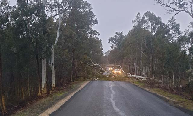 More than 50 fallen trees cleared from roads during storms last week