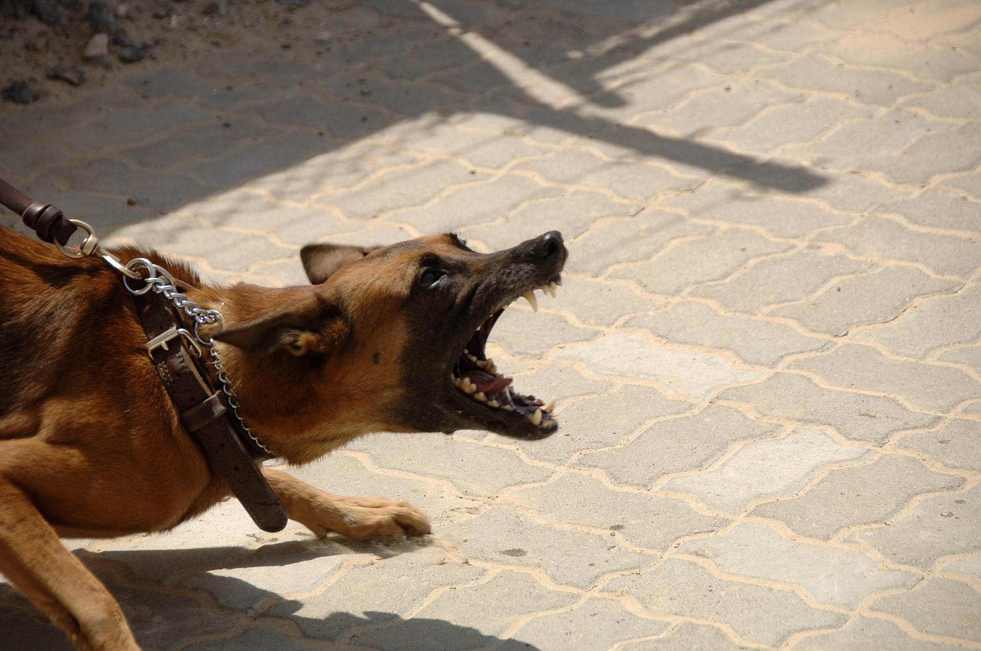 16 dog attacks in eight weeks prompts Council warning